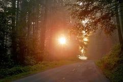Forest Light misterioso Fotografía de archivo