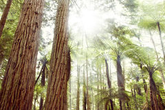 Forest light Stock Photo