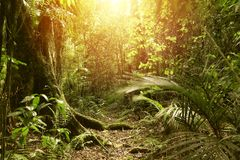 Forest light. Sunlight shining in tropical jungle Stock Photography