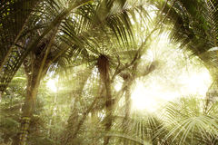 Forest light Royalty Free Stock Photography