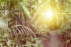 Forest light Royalty Free Stock Images