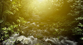 Forest light Royalty Free Stock Photo