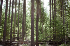 Forest Light verde Imagen de archivo