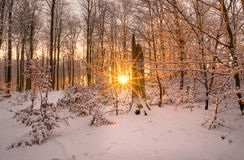 Forest light. A Winter day Stock Photos