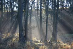 The Forest in autumn. A forest with lighting in South Region in Czech Republic Stock Photos