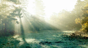 Forest with lights Royalty Free Stock Photography