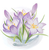 Forest lily. Vector blooming crocuses in the snow Royalty Free Stock Images