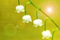 Forest Lily. Fotos de archivo