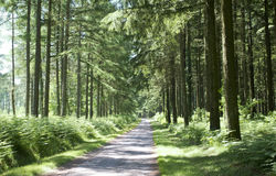 Forest in the Limousin. Picture of a road in a forest in the Limousin Royalty Free Stock Photo