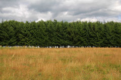 Forest line and meadow Royalty Free Stock Photos