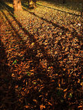 Forest litter Stock Photography