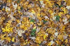 Forest Litter Royaltyfri Bild