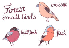 Forest little birds collection Stock Photography