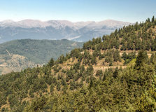 Forest of LLeida Royalty Free Stock Photography