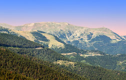 Forest of LLeida Stock Photo