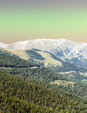 Forest of LLeida Stock Photography