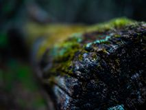 Forest Log cubierto de musgo fotografía de archivo libre de regalías