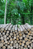 Forest Log Pile Royalty Free Stock Photography