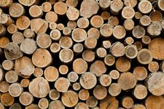 Pile of wood logs .Forest logging site. felled tree trunks. stock photos