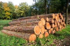 Forest logging Royalty Free Stock Image