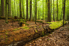 Forest logs Royalty Free Stock Photography