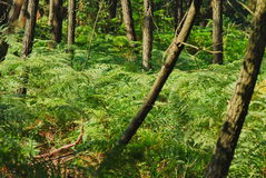 Forest. Lot of trees in forrest Stock Photography