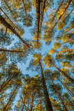 Forest low angle Royalty Free Stock Photo