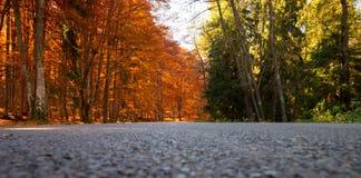 Forest_low arancio e verde Immagine Stock