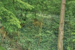 Forest In Lower Saxony Fotografie Stock Libere da Diritti