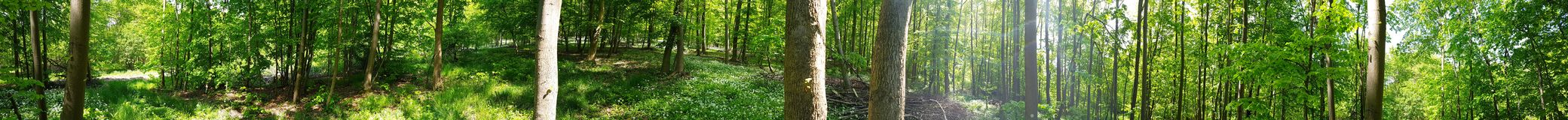 Forest In Lower Saxony imagens de stock royalty free