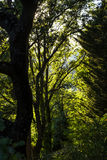 Forest in Luberon in the south of France Stock Images