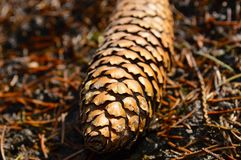 Forest lump lies on dry land. Forest lump lies on the ground royalty free stock photo