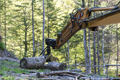 forest machine Royalty Free Stock Images