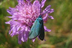 Forest macro photo of the flower and beautiful blue butterfly Royalty Free Stock Images