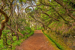 In the forest, Madeira Royalty Free Stock Images