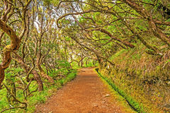 In the forest, Madeira Stock Image