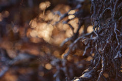 Forest Magic royaltyfri fotografi