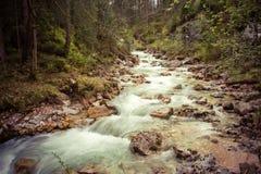 forest magic Στοκ φωτογραφία με δικαίωμα ελεύθερης χρήσης