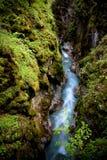 forest magic Στοκ Φωτογραφίες