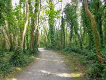 Forest 2. Malahide, Forest Ireland Royalty Free Stock Photo