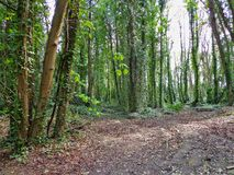 Forest. Malahide Forest, Ireland Royalty Free Stock Photos