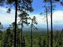 Forest Maliche Mexico stock photo