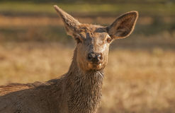 Forest Mammals Royalty Free Stock Photo
