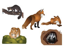 Forest mammals Royalty Free Stock Photos