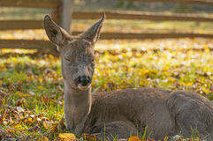 Forest mammals Stock Images