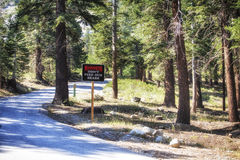 Forest at Mammoth lakes area, USA. Forests road at Mammoth Lakes area. Don't feed our bears - sign visible in the center of the picture. Mammoth Lakes is a town royalty free stock photography