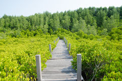 Forest mangrove Stock Photography