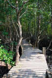 Forest mangrove Stock Images