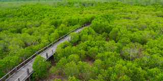 The forest mangrove. Royalty Free Stock Photography