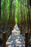 The forest mangrove Stock Images